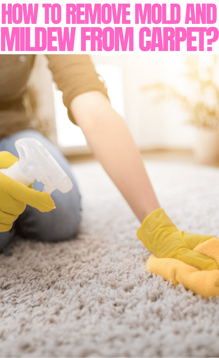 How to Remove Mold and Mildew from Carpet Step by Step