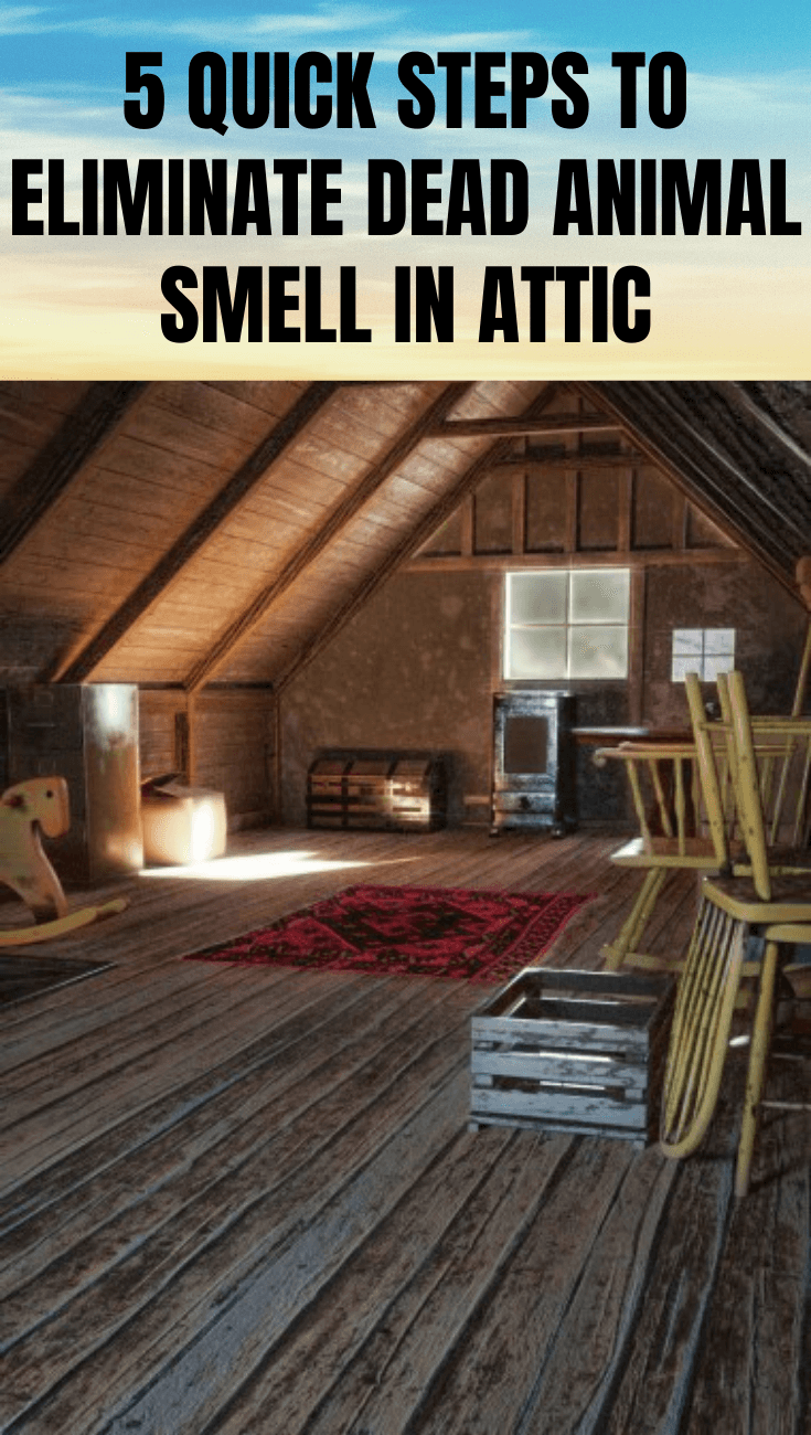 5 QUICK STEPS TO ELIMINATE DEAD ANIMAL SMELL IN ATTIC