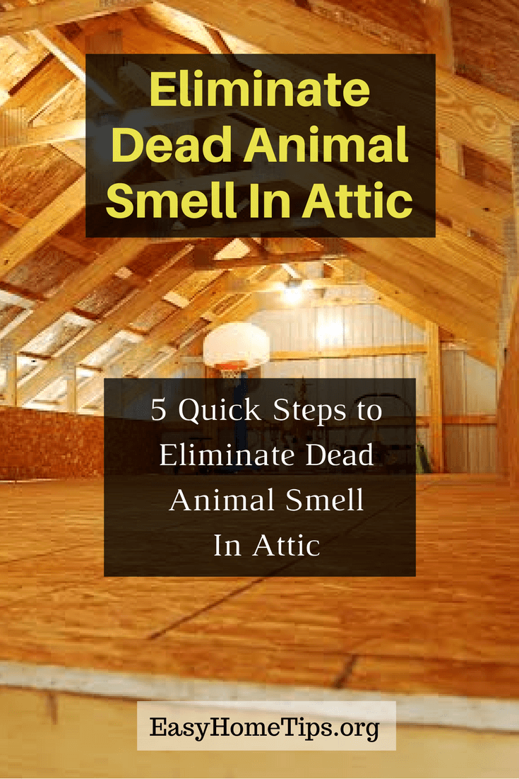Eliminate Dead Animal Smell In Attic