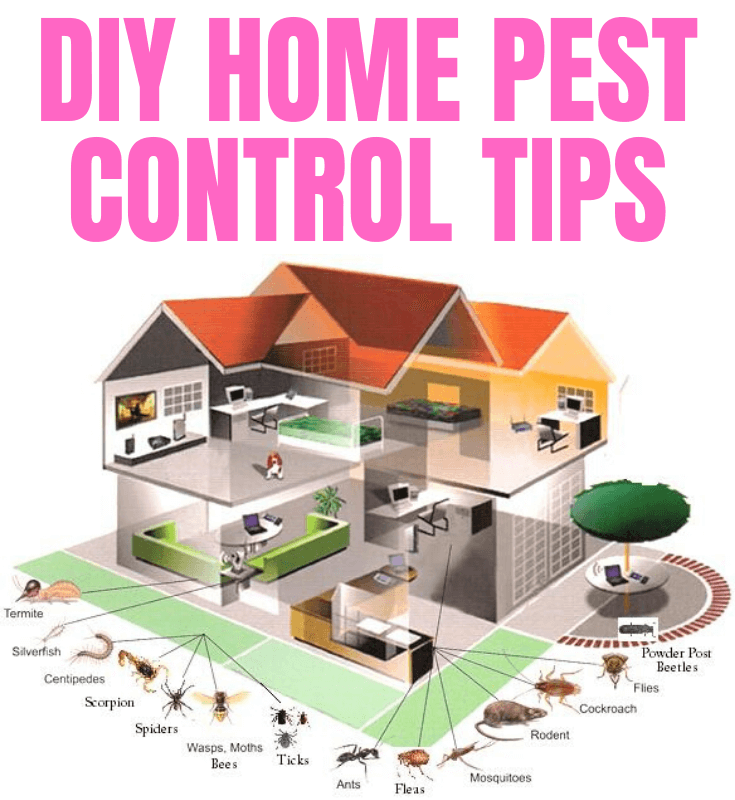 DIY HOME PEST CONTROL TIPS