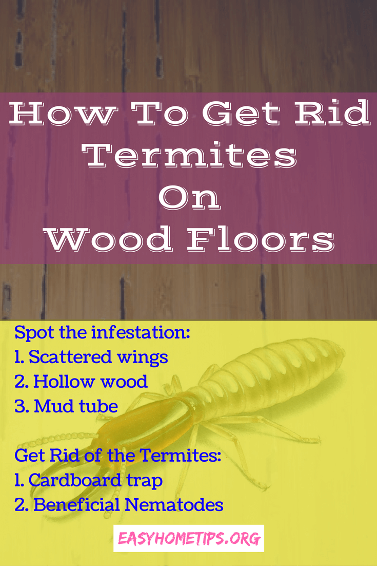 How To Get Rid Termites On Wood Floors