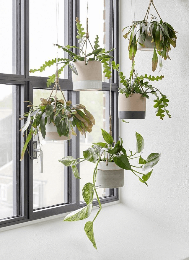 Window decor with hanging pot plant