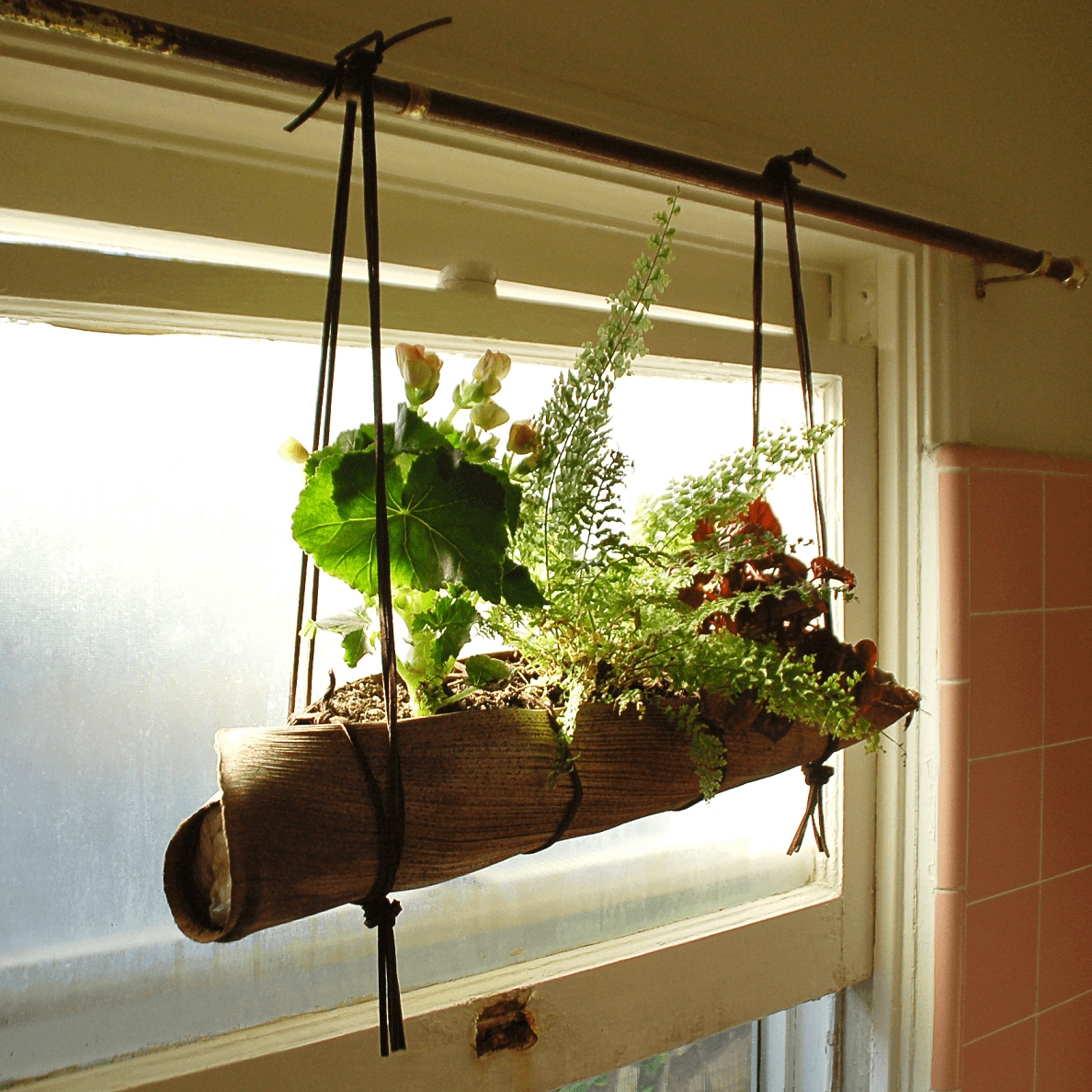 Hanging pot plant diy with palm inside window