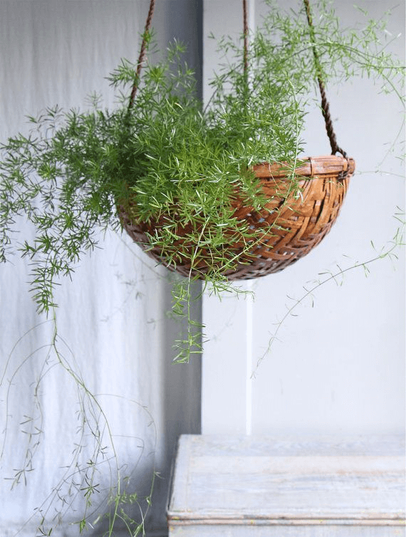 Old Fruit Basket Planters for Front Porch Decor Ideas