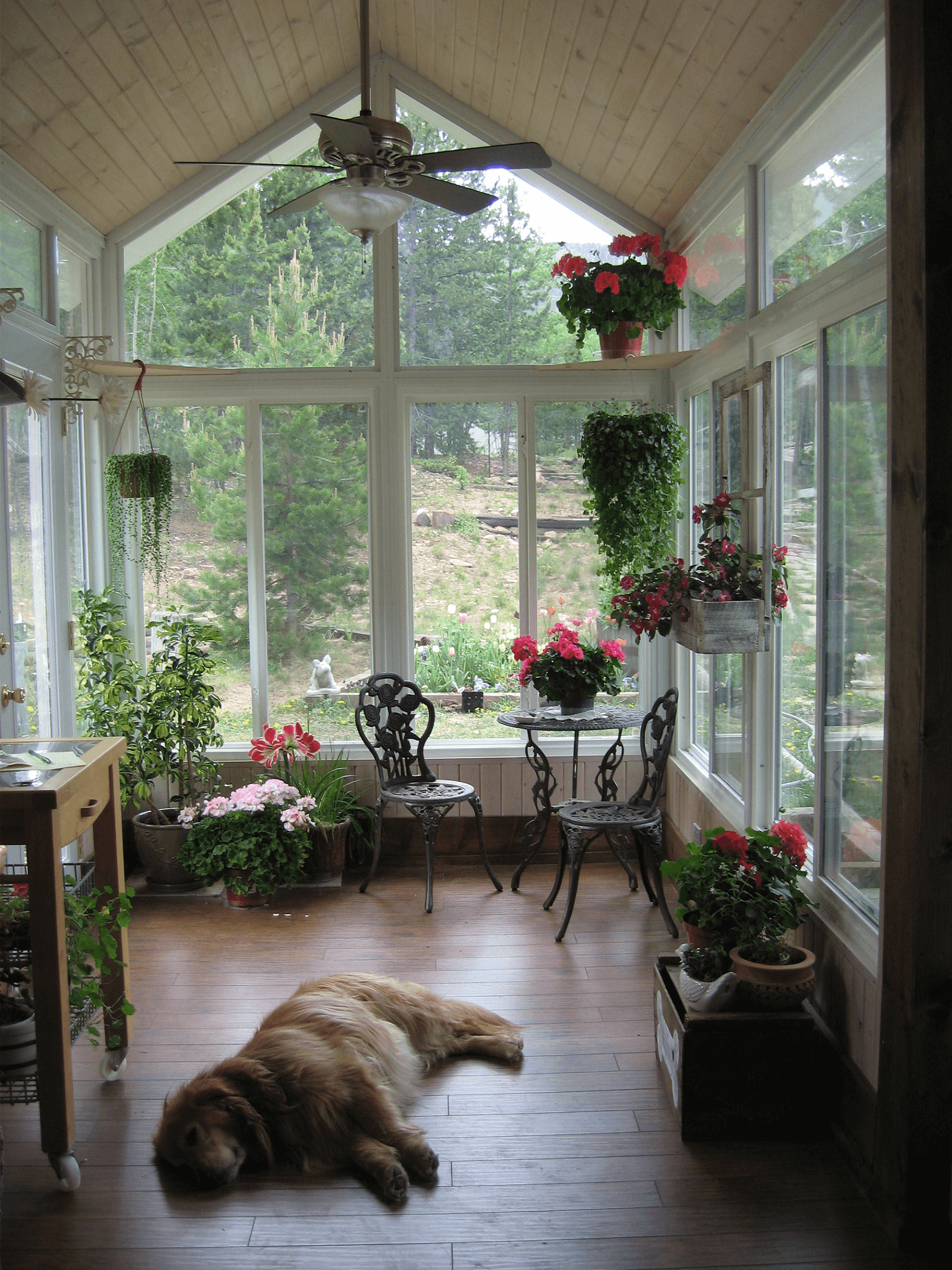 Creative Planting Screened Porch Design Ideas