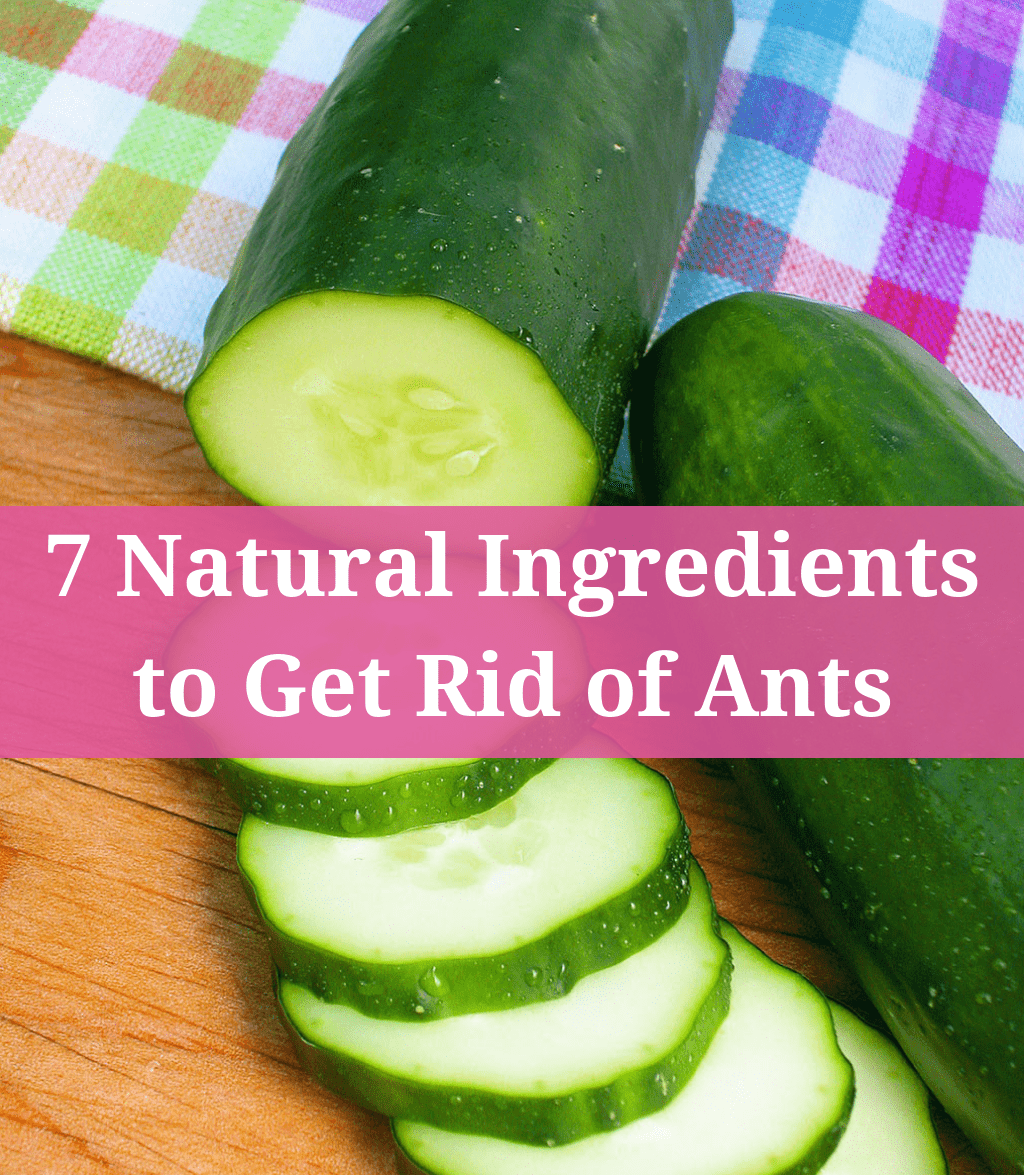 7 Natural Ingredients to Get Rid of Ants
