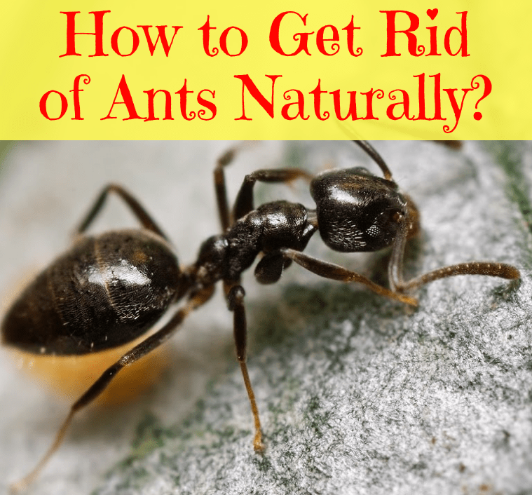 Natural Home Hacks To Get Rid Of Ants