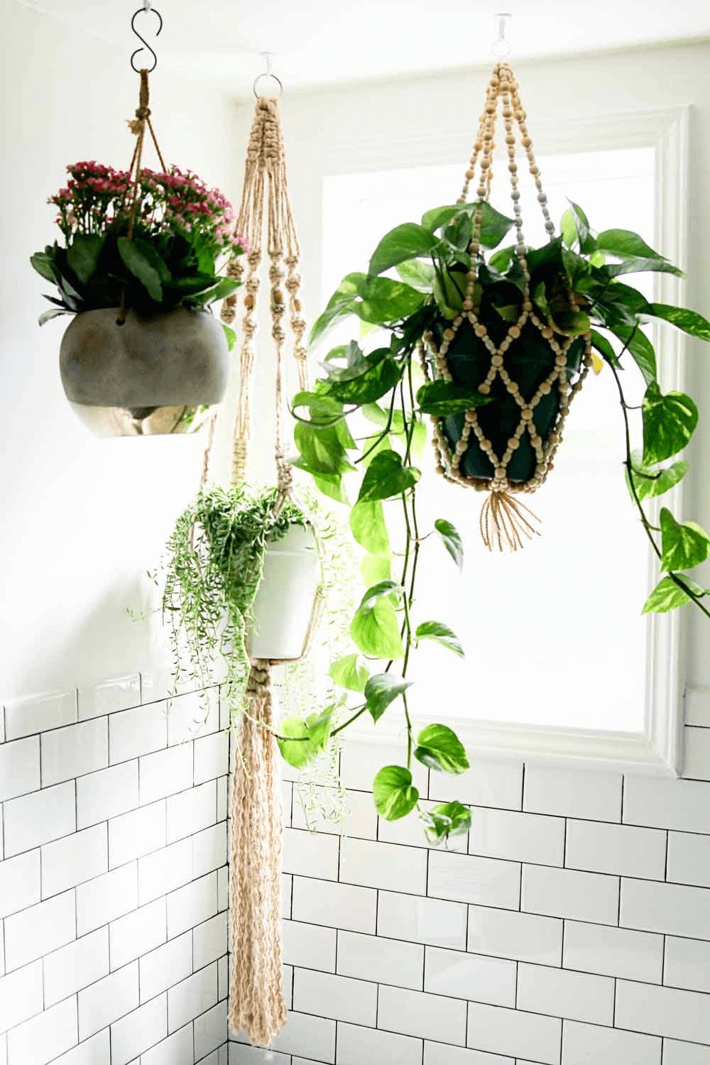 Hanging plant bathroom small spaces