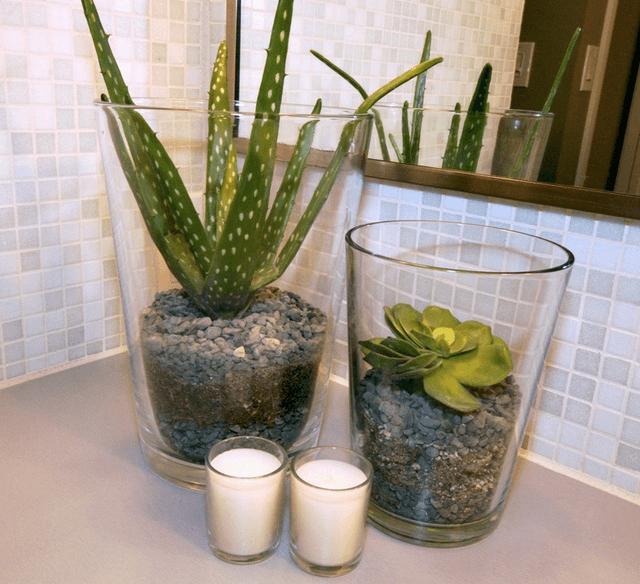 Tiny flower plants for bathroom decor
