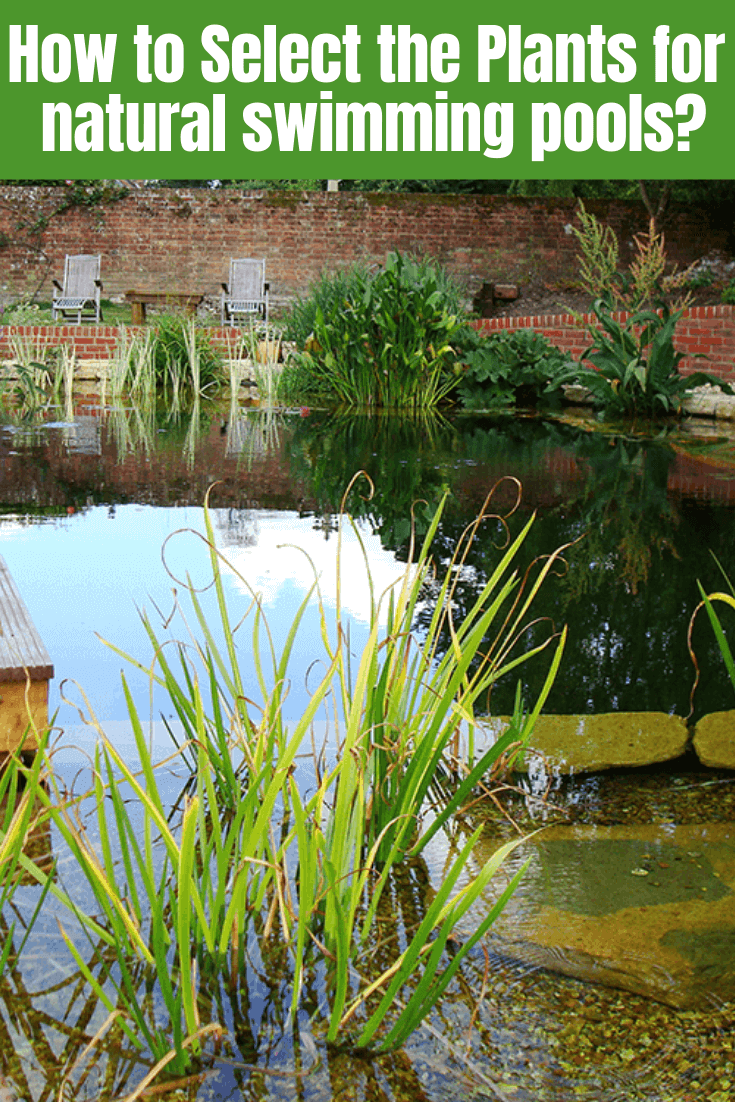 How to Select the Plants for natural swimming pools
